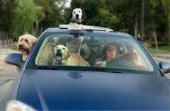 Traveling With Pets In Car
