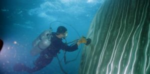 Boat Maintenance Tips: Underwater Hull Cleaning