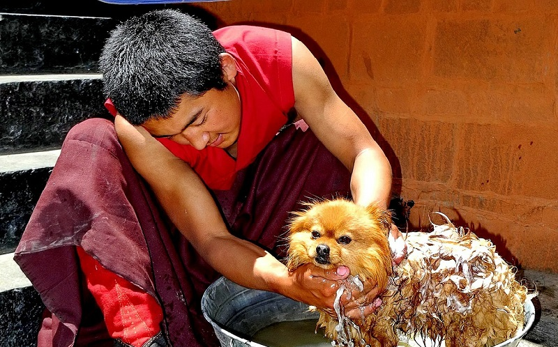 Pet Car Wash: How to Choose the Right One for Your Best Buddies