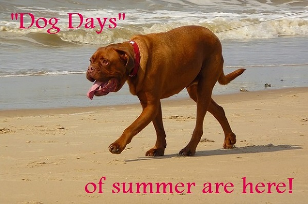 Dog Days of Summer Are Here